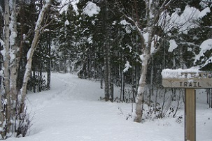 wintertrail1